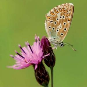 Espaces Verts № 2. Vers un fleurissement favorable aux pollinisateurs (numérique)